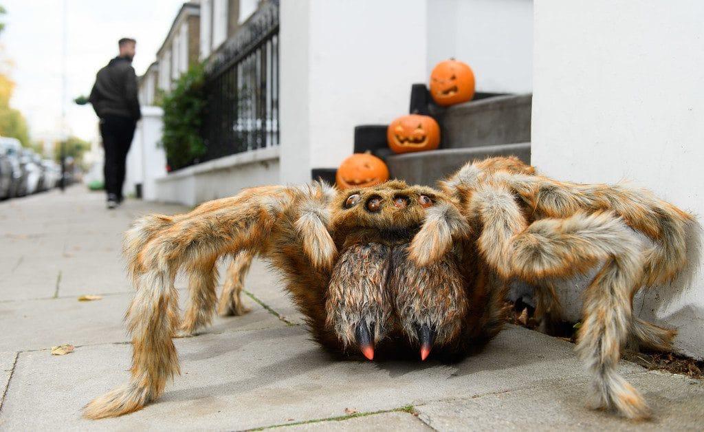 Fanta Spider Halloween